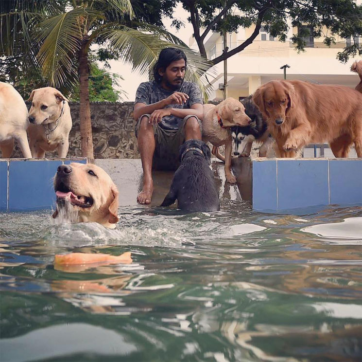 Back After This Festive Weekend Now Book A Vacation For Your Pooch At Shravan 39 S Hotel For Dogs